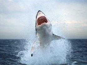 Лазурный берег закрыли для купания из-за опасности появления акулы