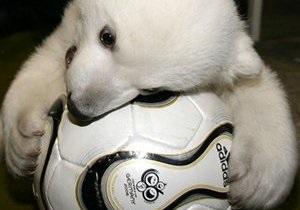 В Ростовский зоопарк привезут двух белых медвежат из Киева