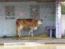 Фонд Ахметова добрался в труднодоступные села Карпат