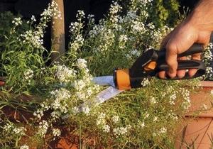 Уникальный эксперимент: Британский ученый проведет 48 часов в боксе с растениями