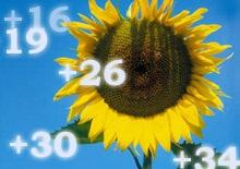 Погода на 1 августа
