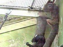 В московском зоопарке горит подвал обезьянника