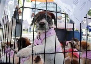 Новости науки - собаки: Ученые выяснили, почему собаки вызывают больше сочувствия, чем люди