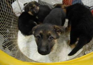 СМИ: в Украине приобретает популярность охота на собак