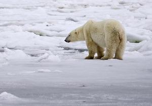 Белый медведь напал на станцию метеорологов на Чукотке