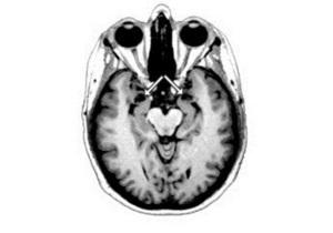 Ученые установили, что мозг человека содержит универсальную  систему  чтения