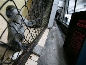 Экологи: Избиты свидетели  закулисных дел  Киевского зоопарка