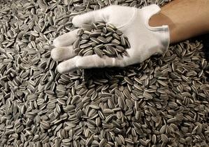 Галерея Тейт Модерн купила фарфоровые семечки Ай Вэйвэя