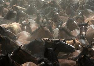 Казахстан готов удивить мир блюдами из конины