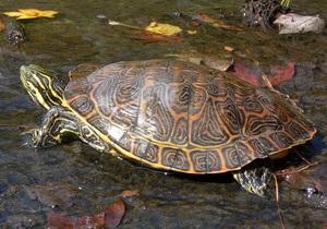В австрийском зоопарке прожившие вместе 115 лет черепахи решили расстаться