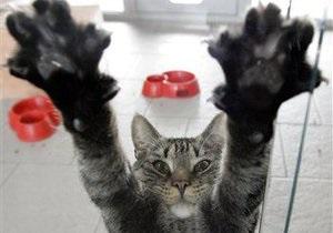 В Киеве запретили продажу собак и кошек