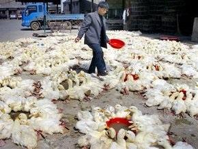 Эксперты: В мире сохраняется вероятность пандемии птичьего гриппа