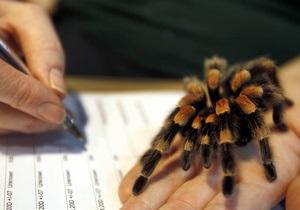 В Шотландии ищут дом выброшенному на помойку пауку-птицееду