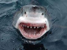 Турецкие пляжи закрываются из-за акул