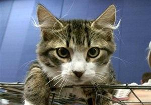 Ученые: Кошки, которые едят со стола, страдают психическим расстройством