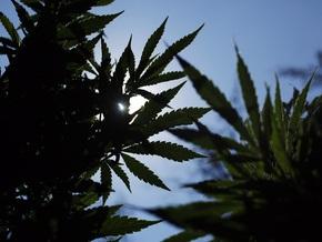 У россиянина среди заготовок на зиму нашли столитровые бочки с марихуаной