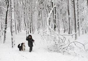 В Киеве неизвестные срубили почти 100 хвойных деревьев