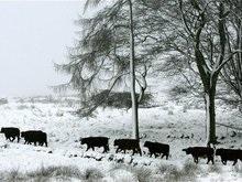 Сибирский антициклон может повредить украинские посевы