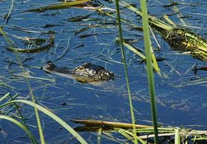 Новости науки - новости о животных: Ученые уличили крокодилов в вегетарианстве