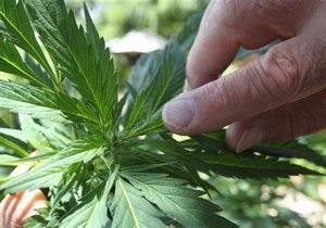 Биологи выяснили, почему некоторые сорта марихуаны не обладают наркотическим действием