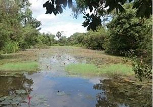 В Камбодже нашли сеть каналов крупнейшего кхмерского храма