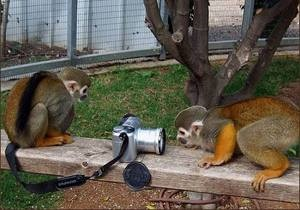 Киевский зоопарк проведет акцию для фотографов, всех владельцев профессиональной техники будут пускать бесплатно