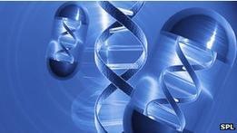 Первые успехи генного метода лечения гемофилии B