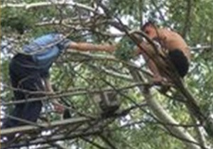 В Запорожье спасатели МЧС сняли с тополя нетрезвого мужчину