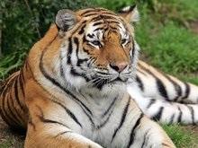 В Калифорнии сбежавший тигр убил одного и тяжело ранил двоих посетителей зоопарка