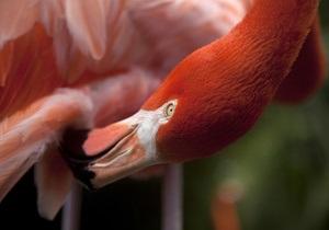 В Киевский зоопарк вместо уникальных фламинго завезли распространенных птиц
