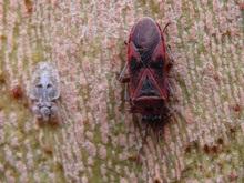В Лондоне обнаружен неизвестный вид жуков