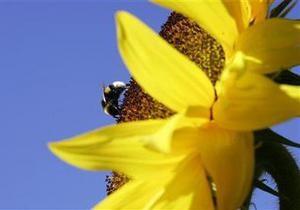 АМКУ возбудил дело против производителей подсолнечного масла