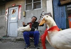 В китайской реке выловили больше тысячи мертвых уток