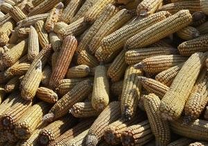 Украина может собрать в этом  году рекордный урожай кукурузы