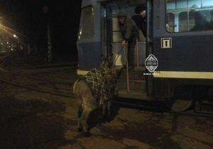 Одессит пытался провести в трамвае осла