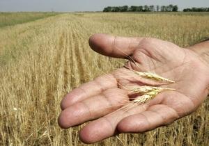 Запасы зерна в Украине за год снизились на 21%