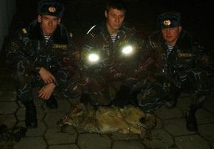 В Минске сотрудники ОМОН поймали волка