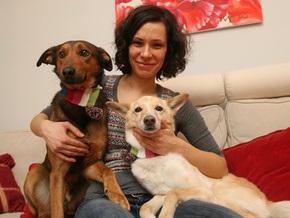 Корреспондент: Украинцы предпочитают дворняг породистым псам