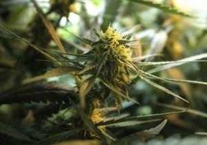 В Тернопольской области у безработного правоохранителя изъяли шесть килограмм марихуаны