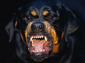 В Киевской области правоохранители ищут собаку, которая загрызла человека