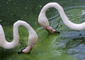 В Испании из-за грозы погибли 80 фламинго