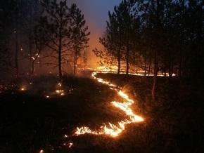 В Винницкой области горели почти восемь гектаров хвойного леса