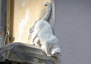 От домашних кошек можно заразиться туберкулезом