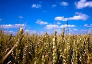 Эксперты прогнозируют дальнейший рост цен на пшеницу