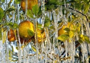 Фотогалерея: Солнечно, местами фруктолед