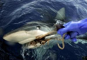 Пьяный турист случайно убил акулу в Шарм-эль-Шейхе