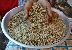 Инициатива Кабмина ввести пошлины на экспорт подсолнечного масла не имеет экономического смысла - эксперт