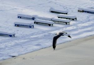 Севастопольцев просят подкармливать птиц, зимующих в бухтах города