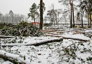 Главный эколог Киева назвал организаторов вырубки деревьев в Дарнице