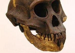 Ученые предположили, что австралопитеки ходили прямо уже 3,6 млн лет назад